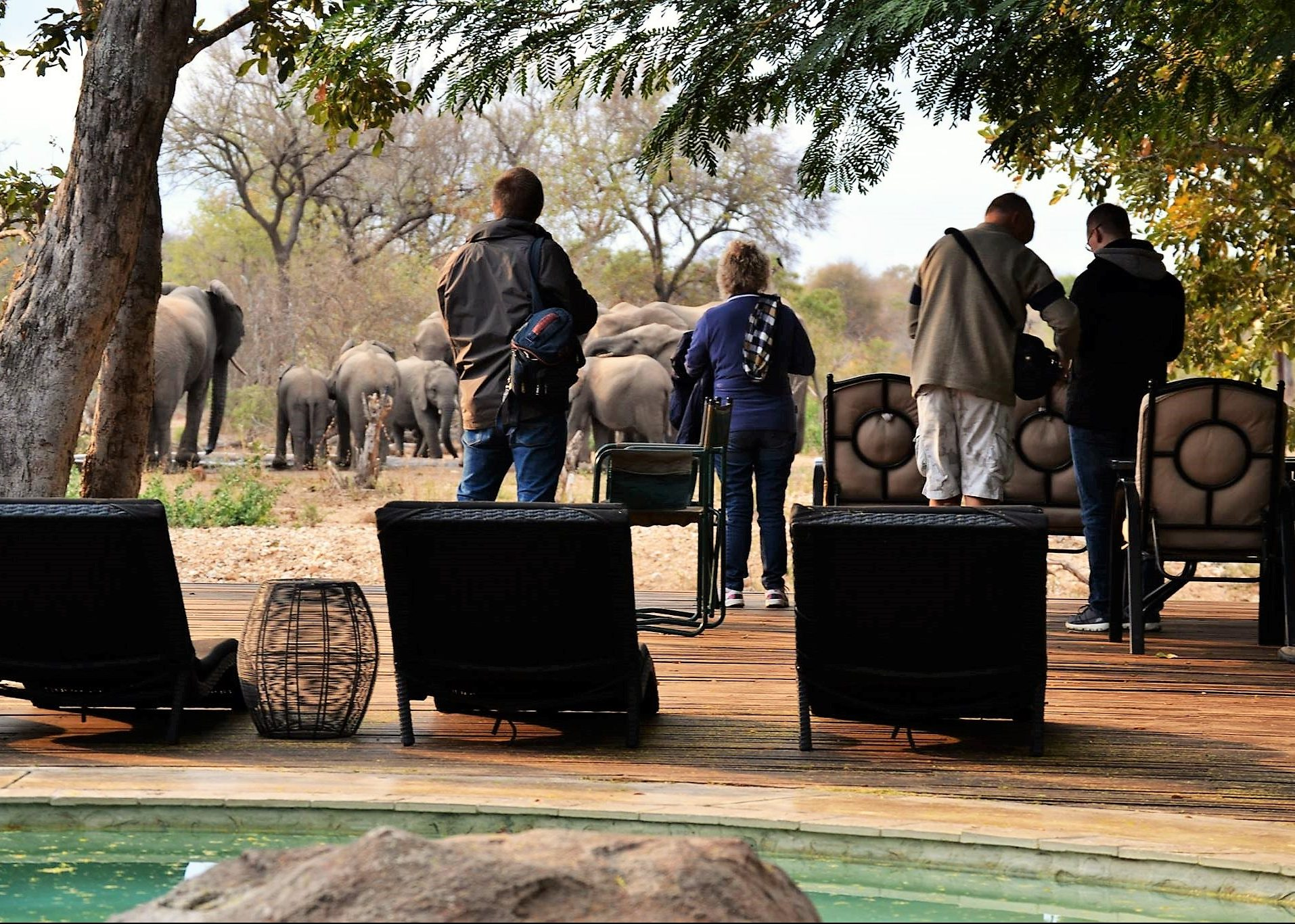 Viewing elephant from nDzuti deck
