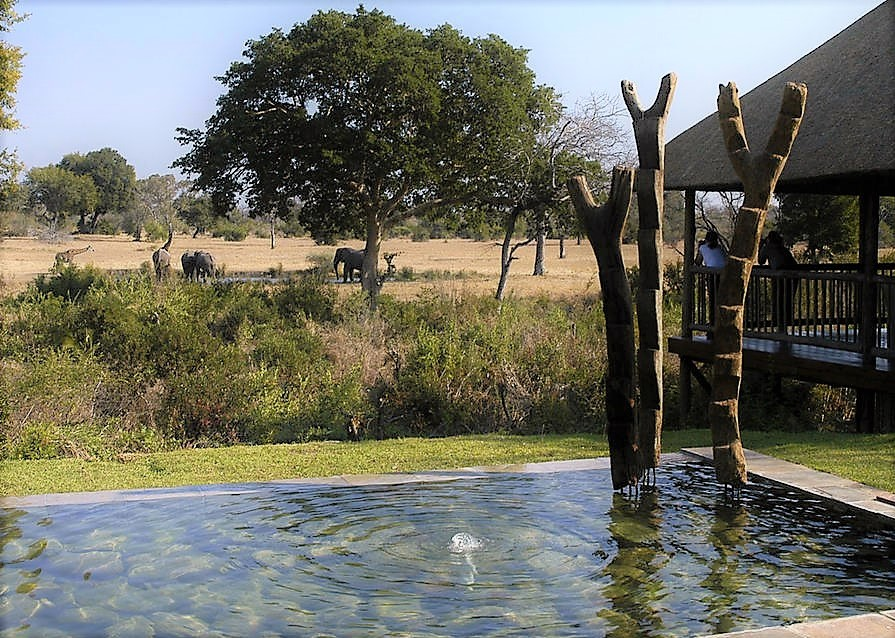 Elephants at Sabi Bush Lodge waterhole