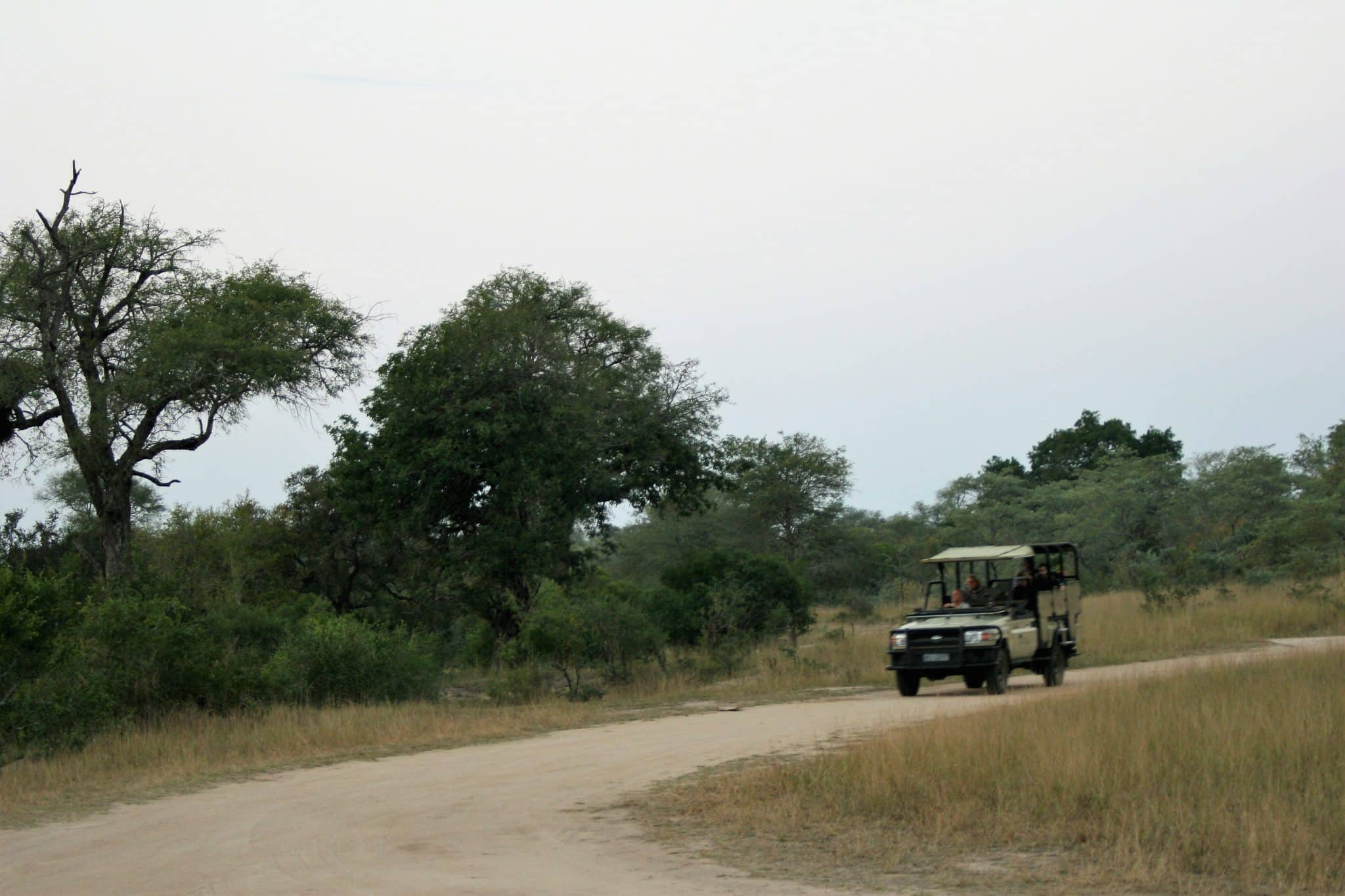 Drives in Kruger Park from Rhino Post