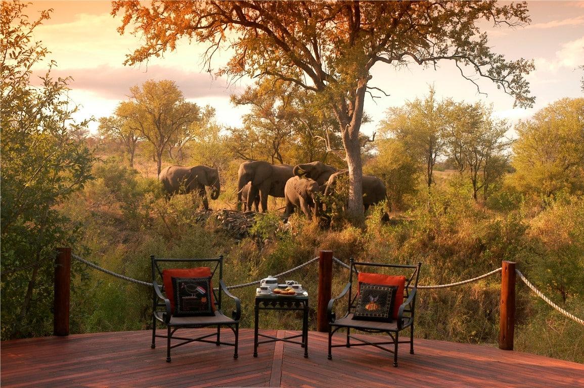 Elephants from Hoyo Hoyo deck