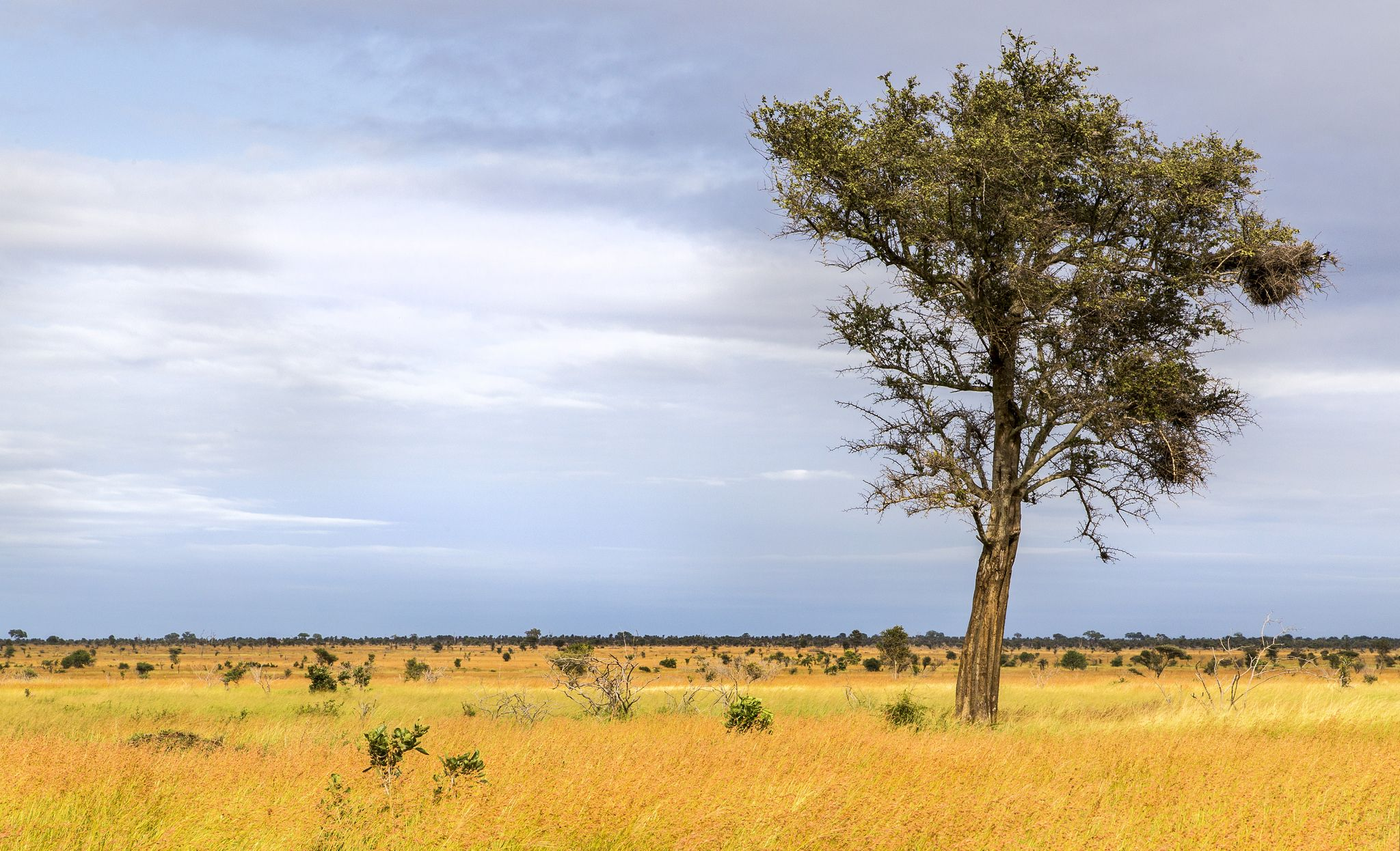 Central Kruger plains, sheldrickfalls