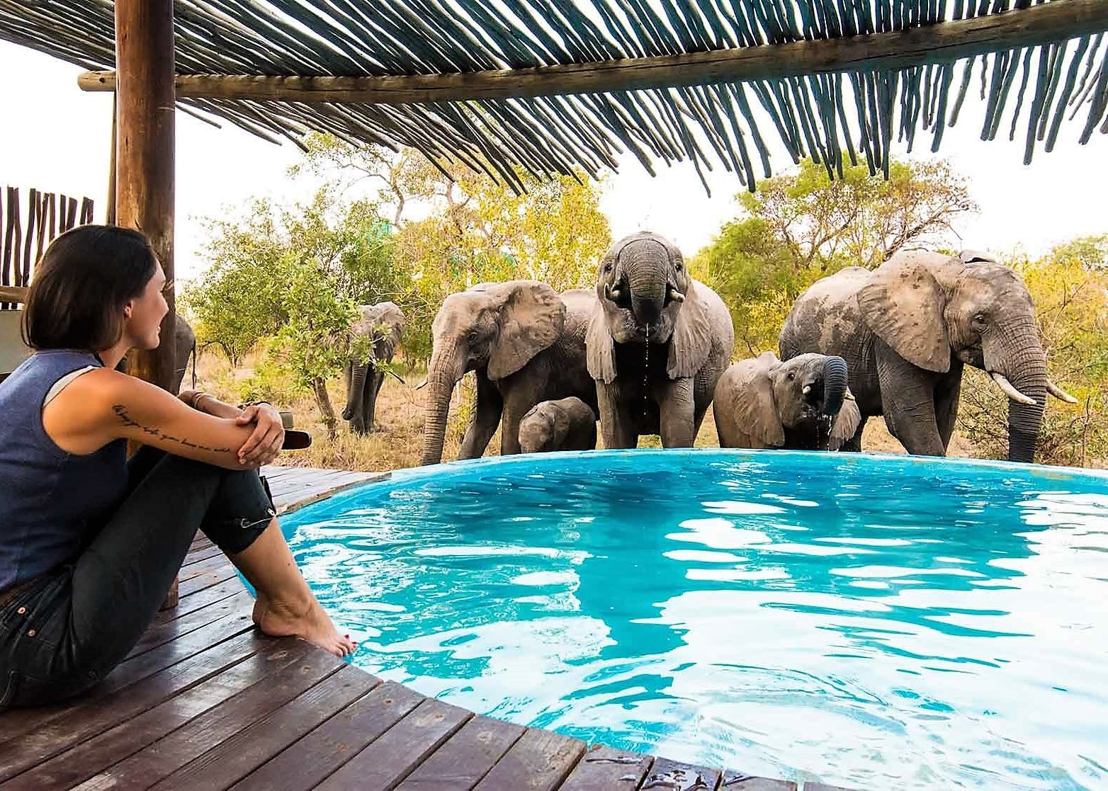 Africa on Foot elephant pool