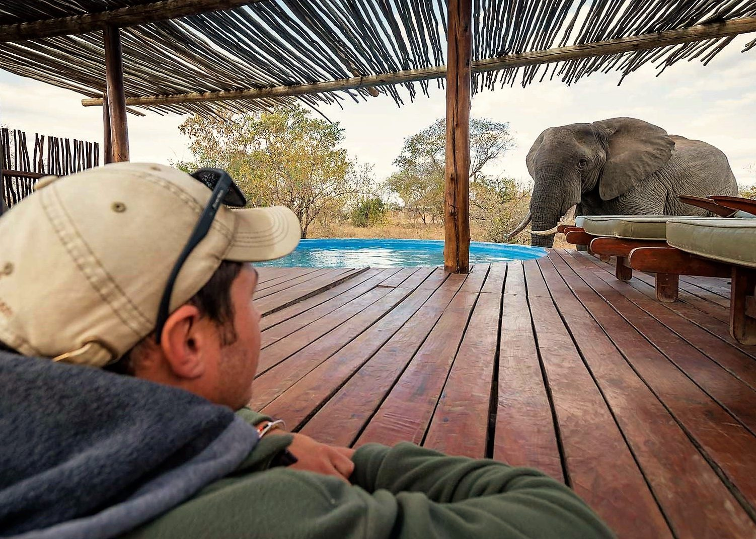 Elephant at Billys Lodge deck