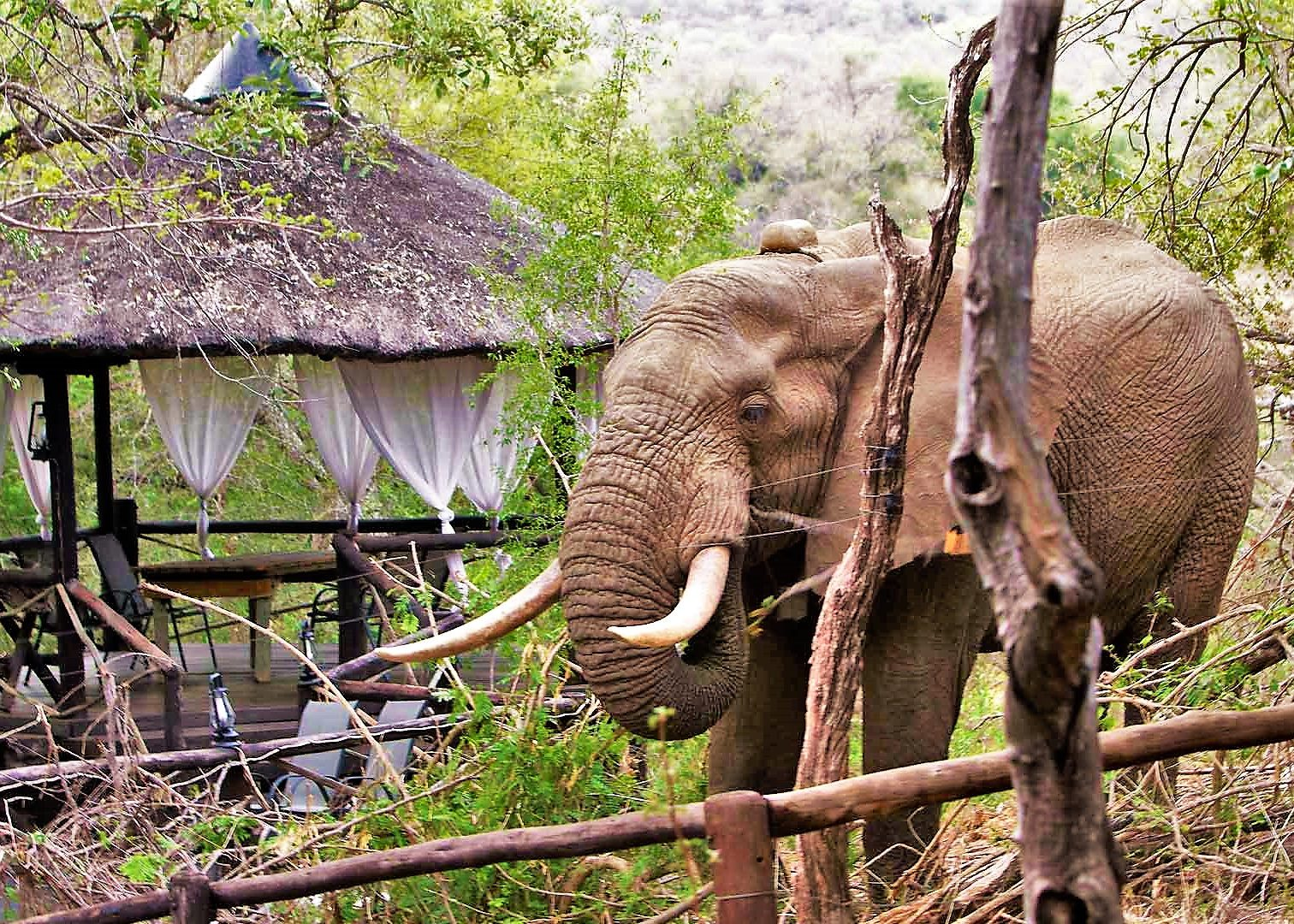 Elephant at Ezulwini River Lodge
