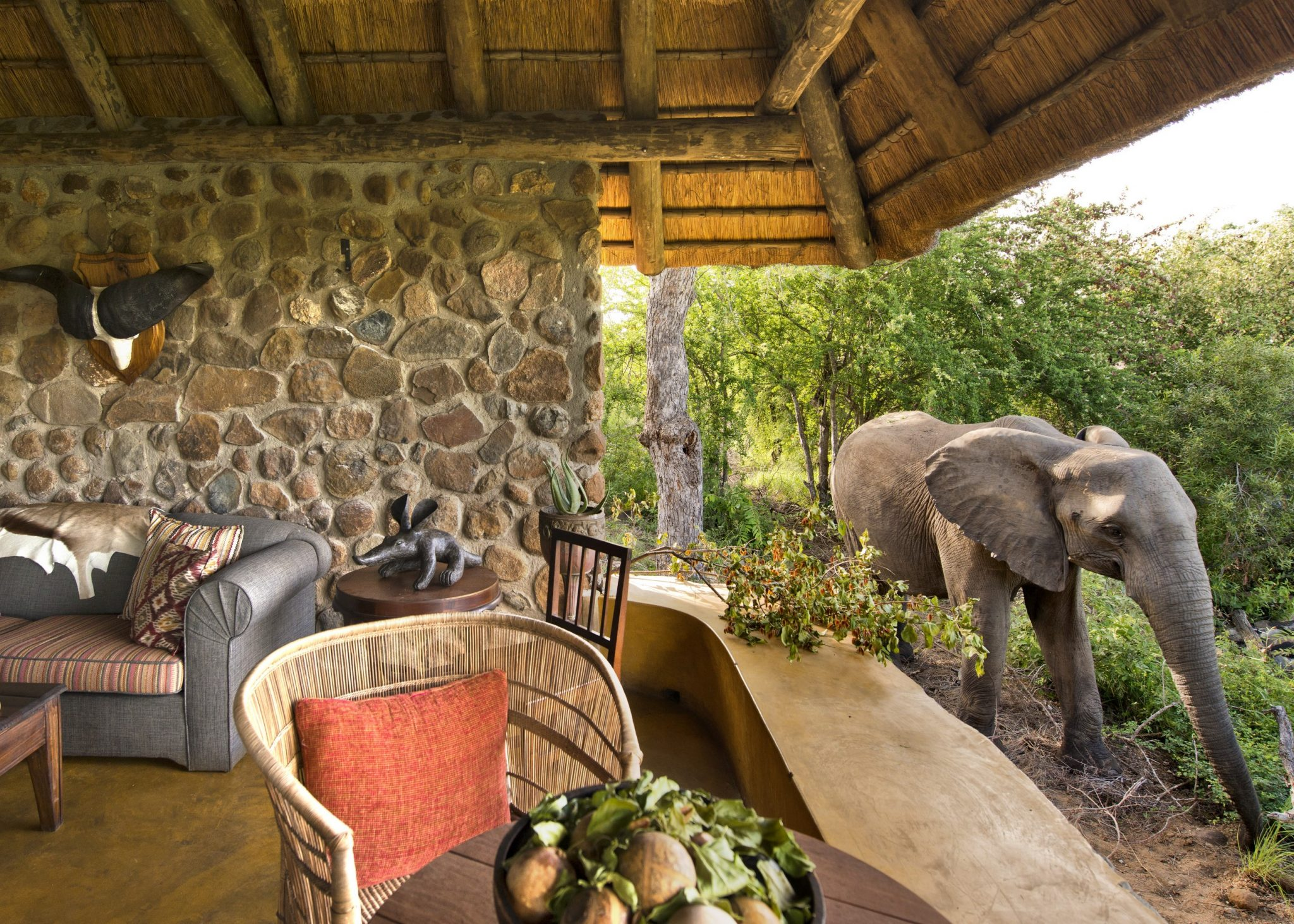 Elephant visiting Geigers Camp veranda