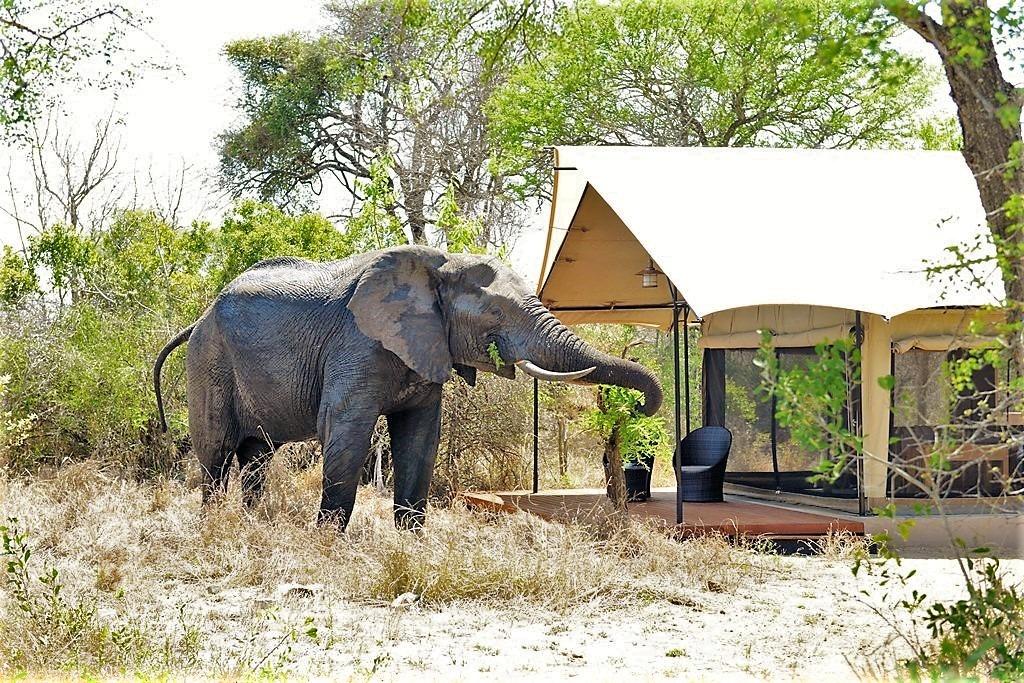 Elephant visiting Khoka Moya