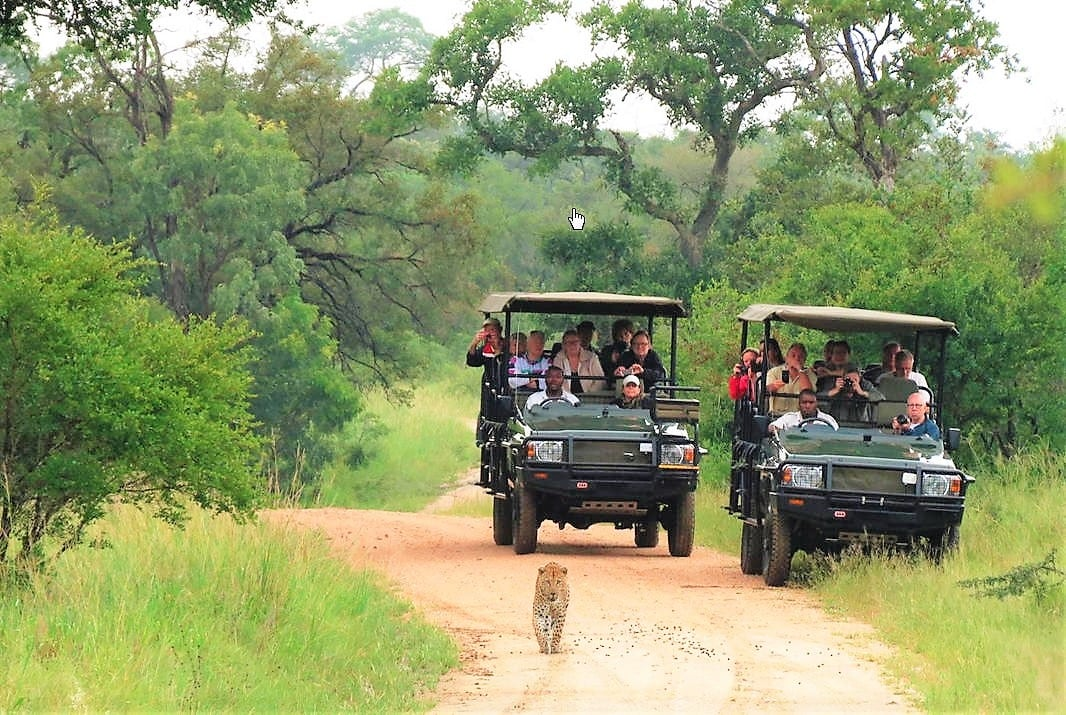 Chasing leopard at Honeyguide