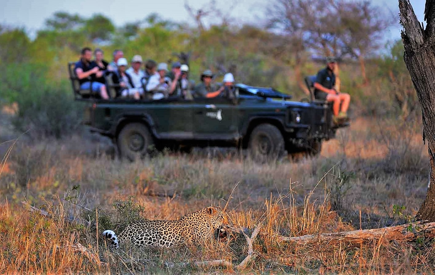 Leopard on game drive at Africa on Foot