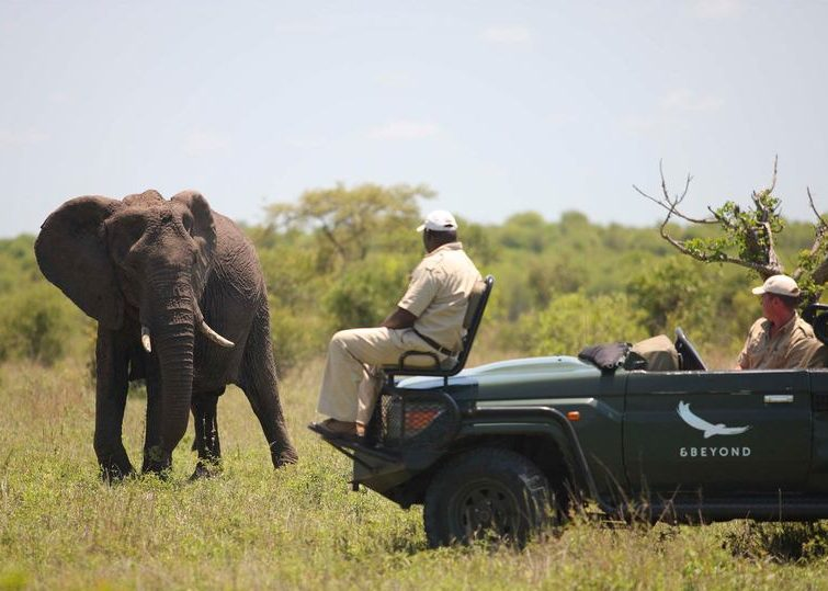 Ngala elephants on game drive
