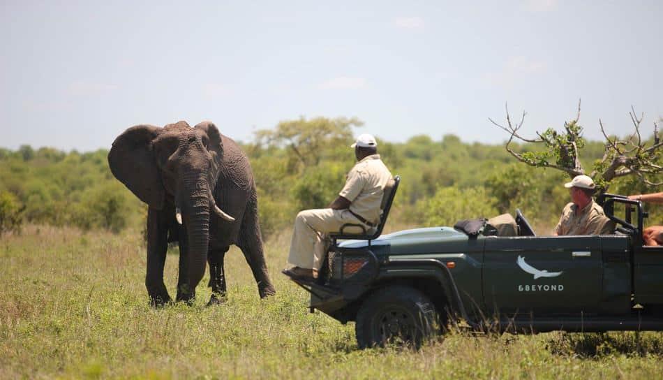 Elephant on game drive at Ngala Safari Lodge