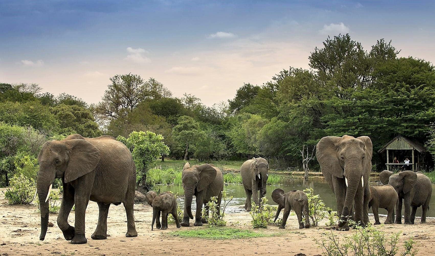 Elephant at Tanda Tula Safari Camp