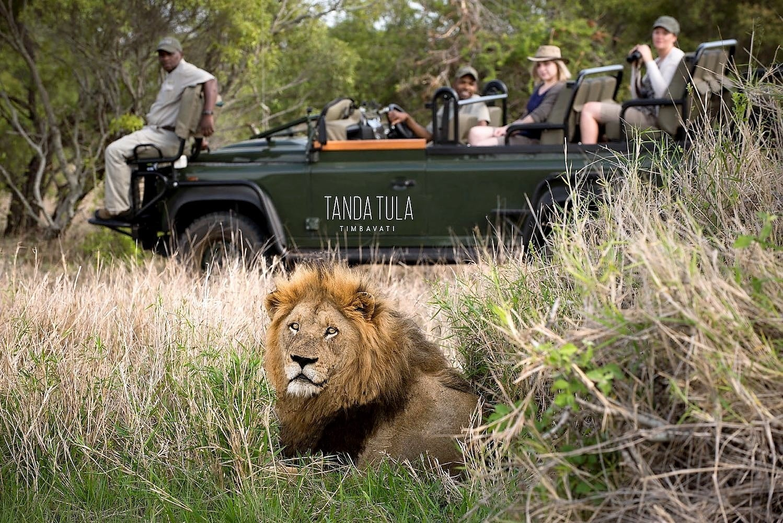 Lion on Tanda Tula drive