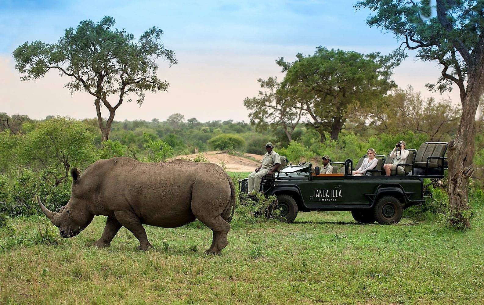 Rhino on Tanda Tula drive