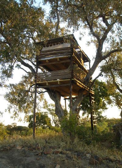 Cracking sleep-outs at Umlani's treehouses