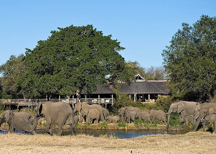 Elephants at Sabi Bush Lodge