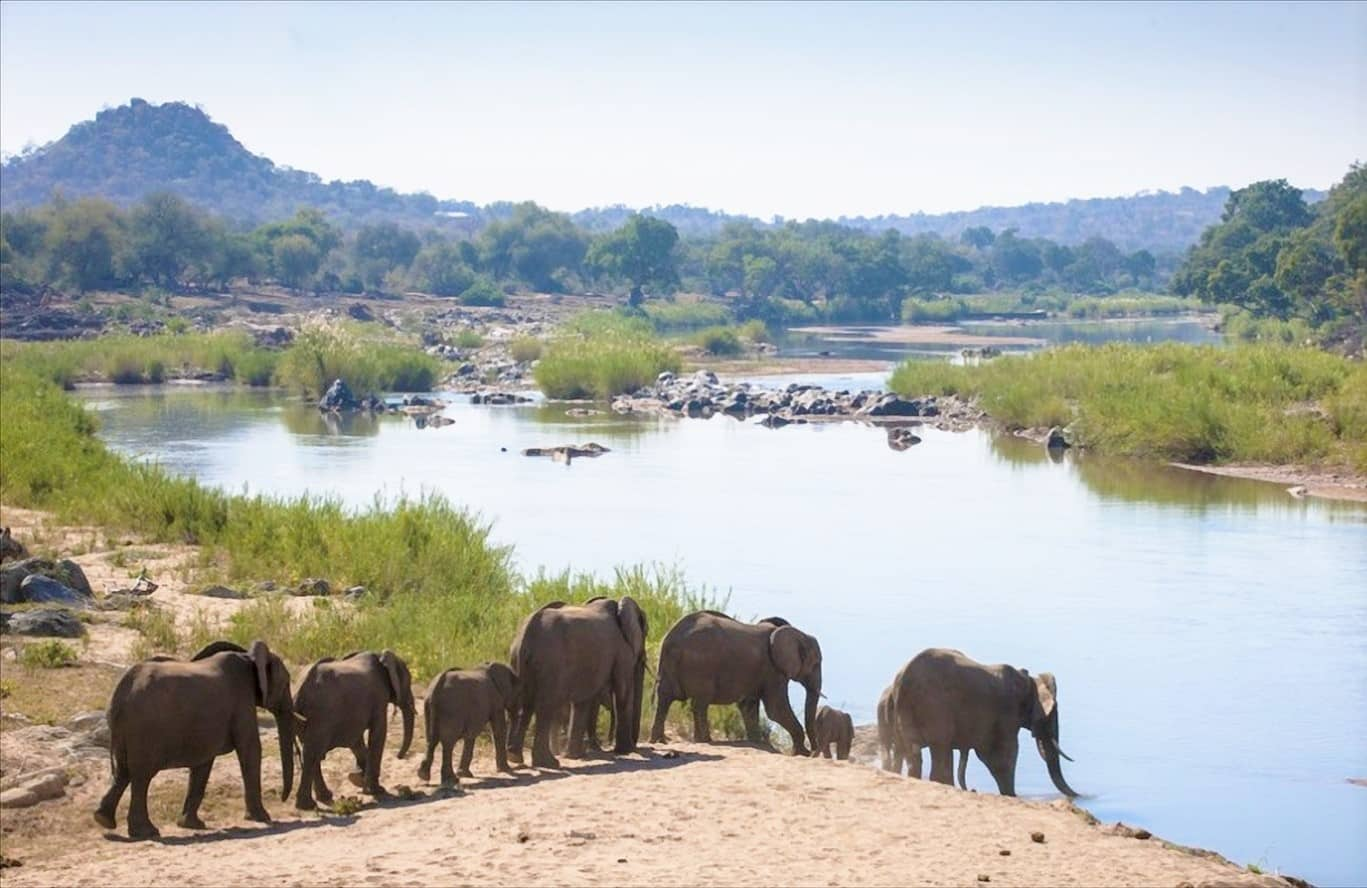 Elephants on Olifants river at Grietjie, Balule