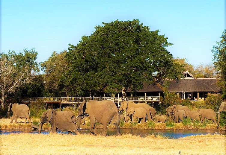 Elephants at Sabi Sabi Bush Lodge