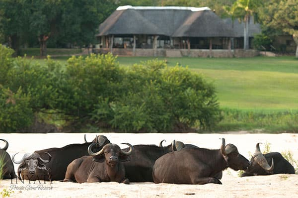Inyati Lodge from waterhole