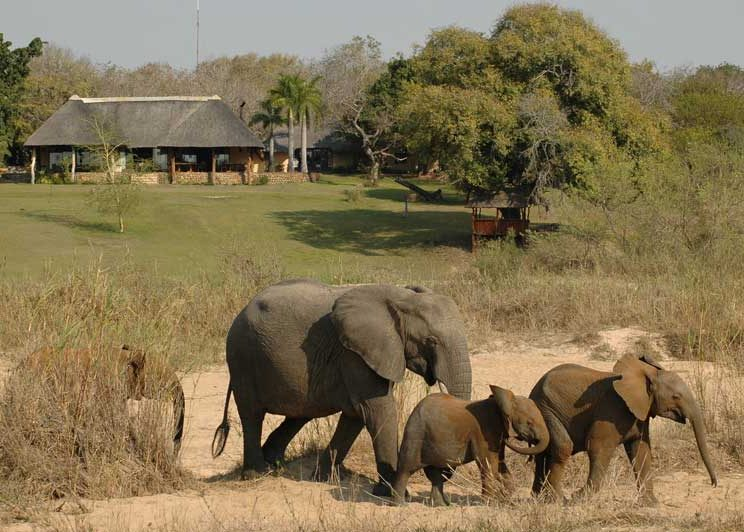 Elephant herd at Inyati Lodge