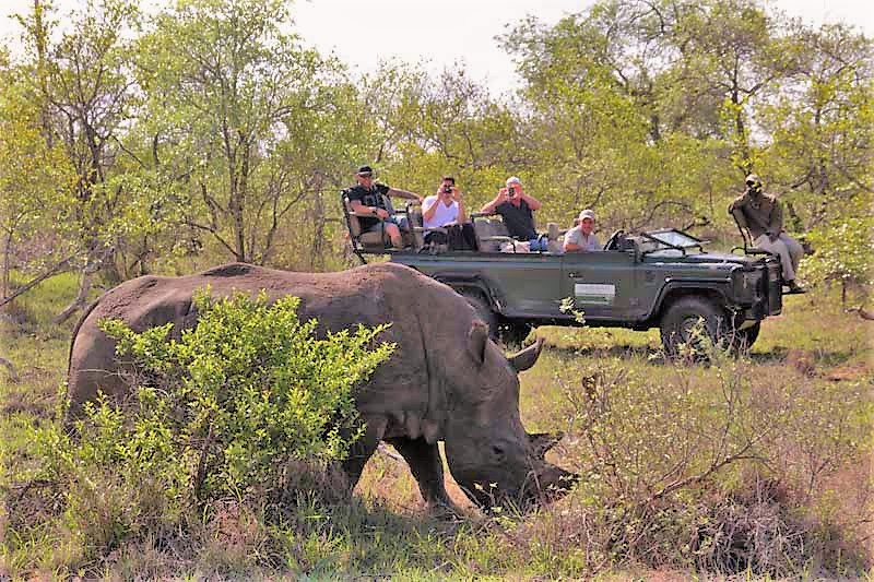 Rhino on drive at Simbavati River Lodge