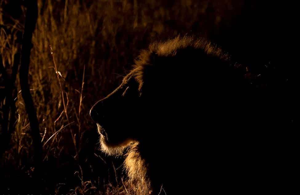 Makanyi Lion, Rico Demetriou