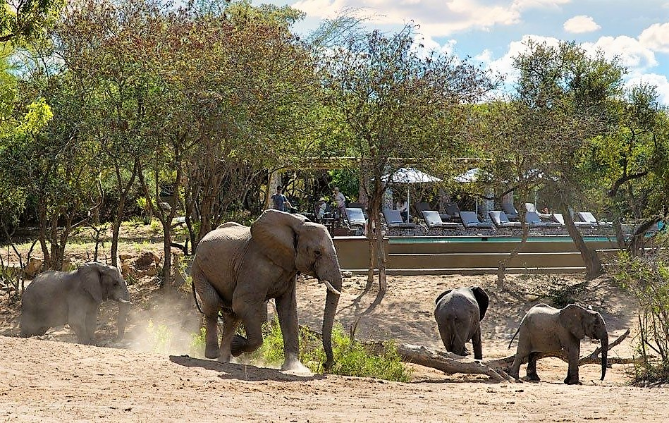 Elephants at Ngala Safari Lodge deck