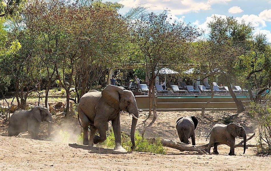 Elephants at Ngala Safari Lodge deck