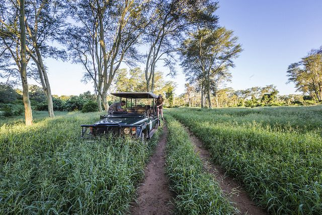 Private drive from Baobah Hill Bush House, image by sheldrickfalls