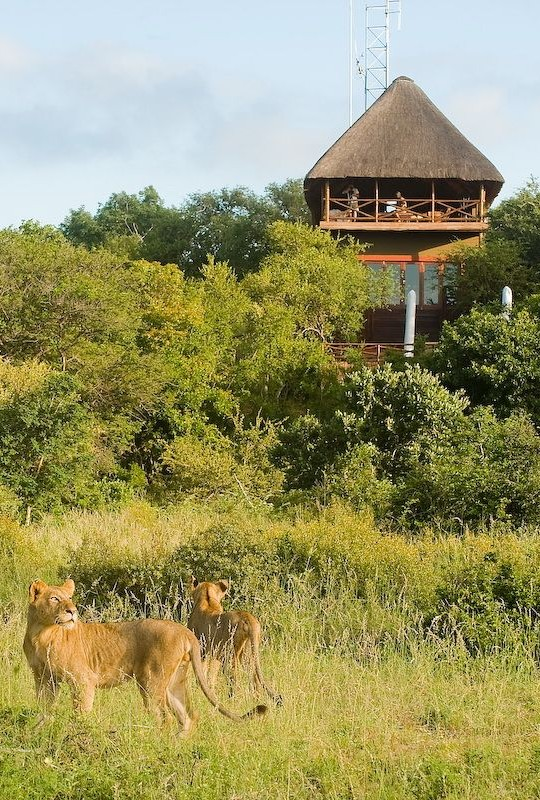Naledi Bushcamp offers a natural lookout
