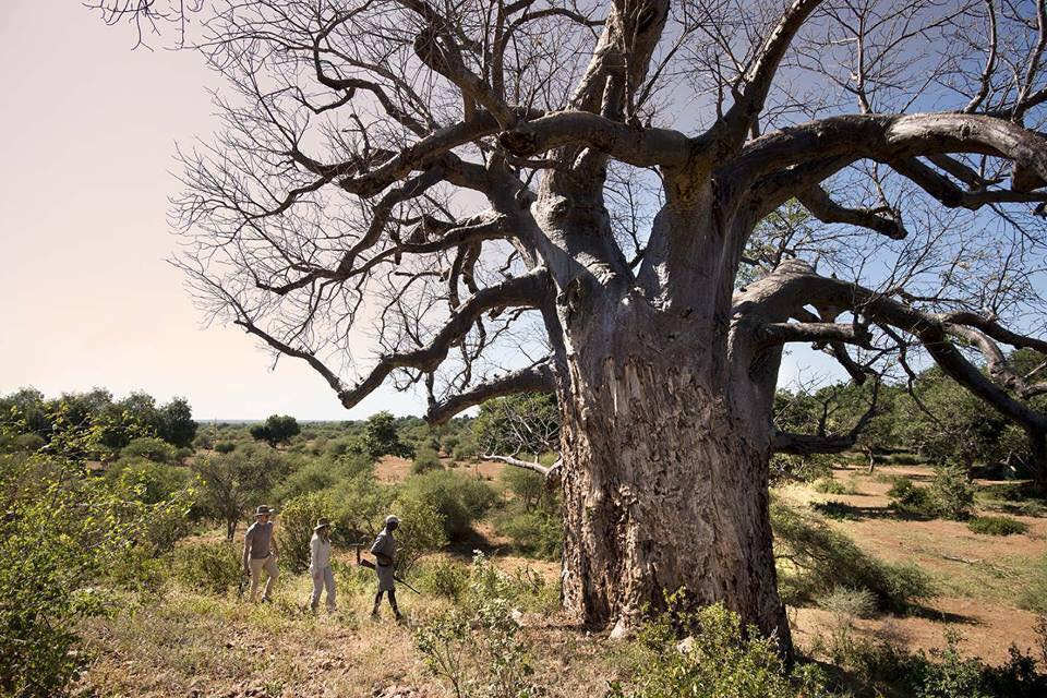 Walking with baobabs, Baobab Hill Bush House