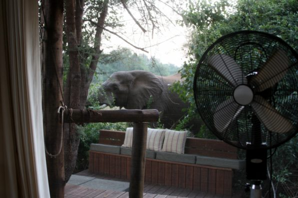 Elephant on room deck at Pafuri Camp