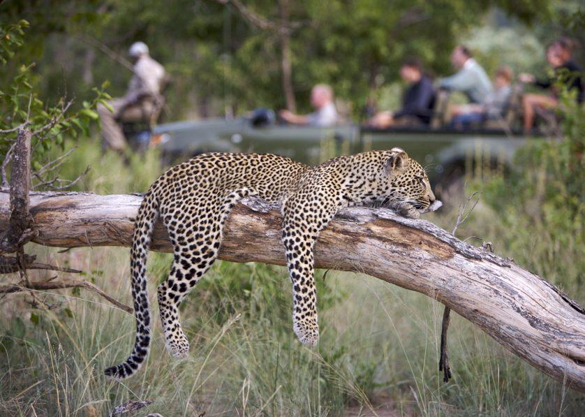 Leopard on Elephant Plains drive