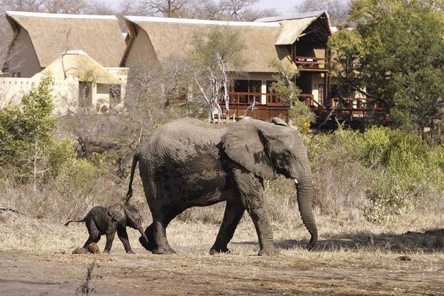 Elephant Plains lives up to its name