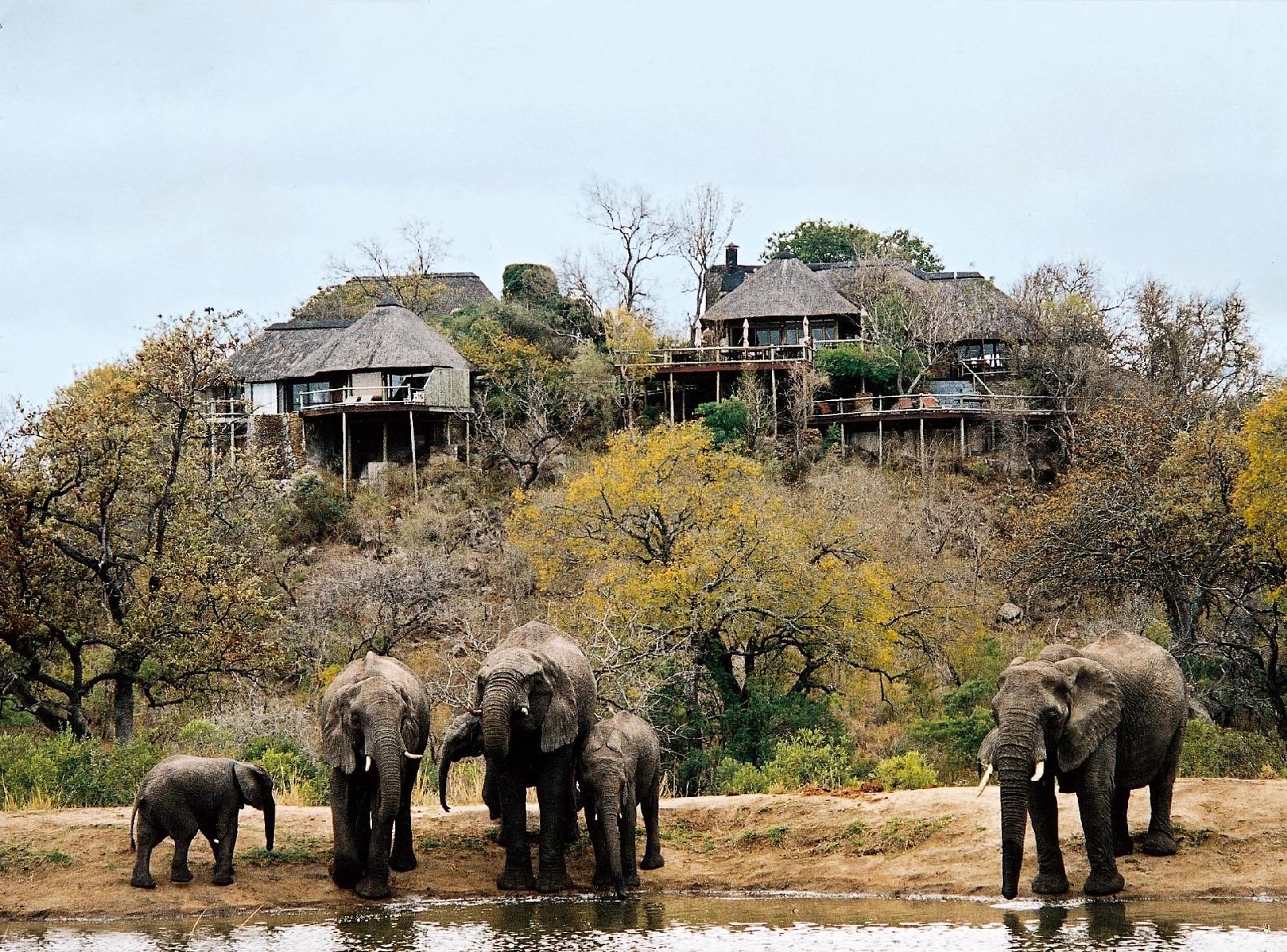 Elephants at Leopard Hills lodge waterhole