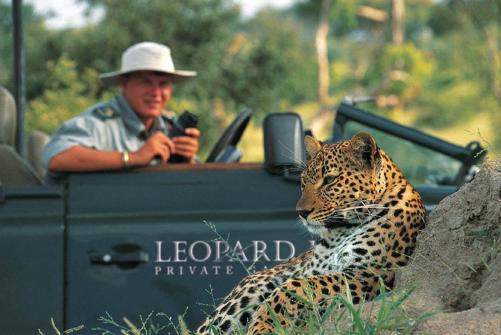 Leopard Hills leopard on drive
