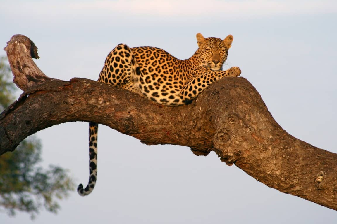 Photographic safaris at Savanna