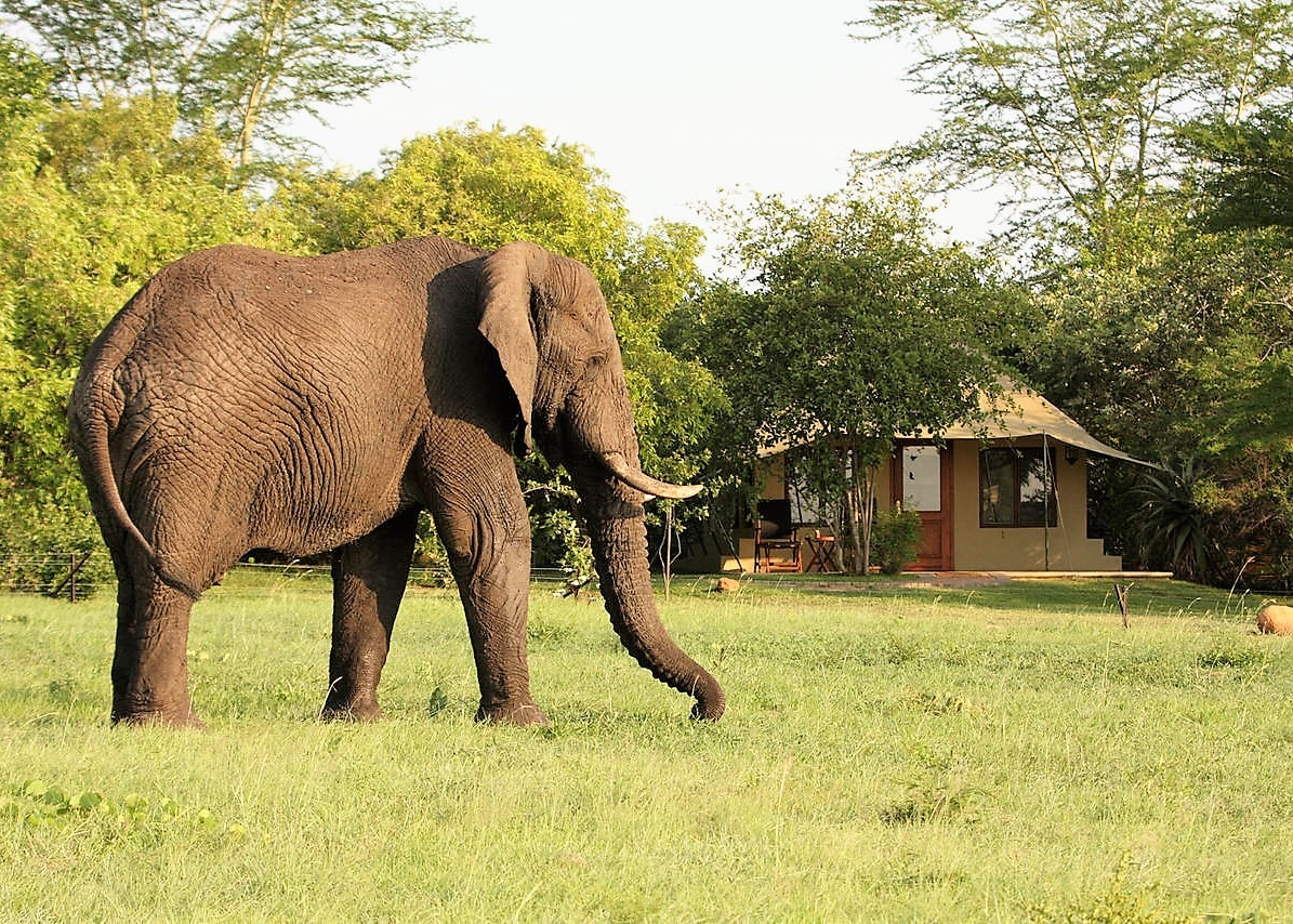Elephant outside Savanna suite