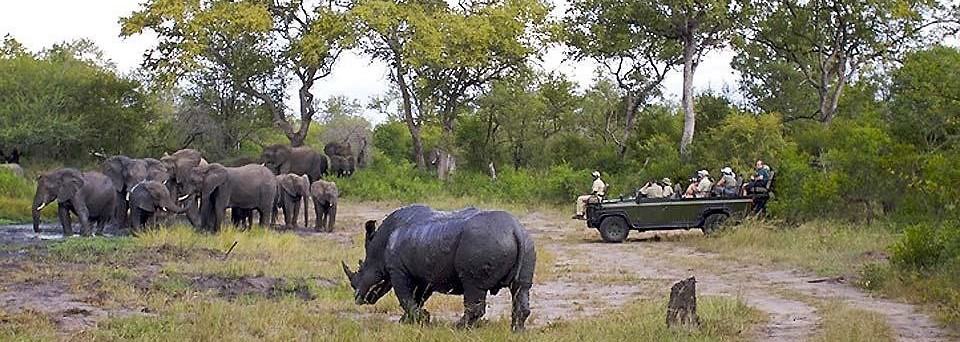Rhino and elephant at waterhole