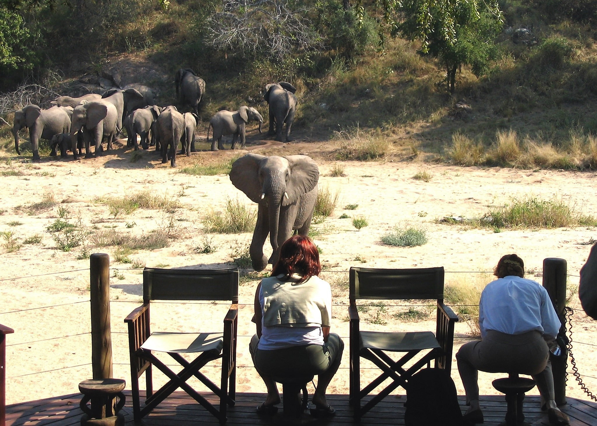 Elephants from Rhino Post Lodge