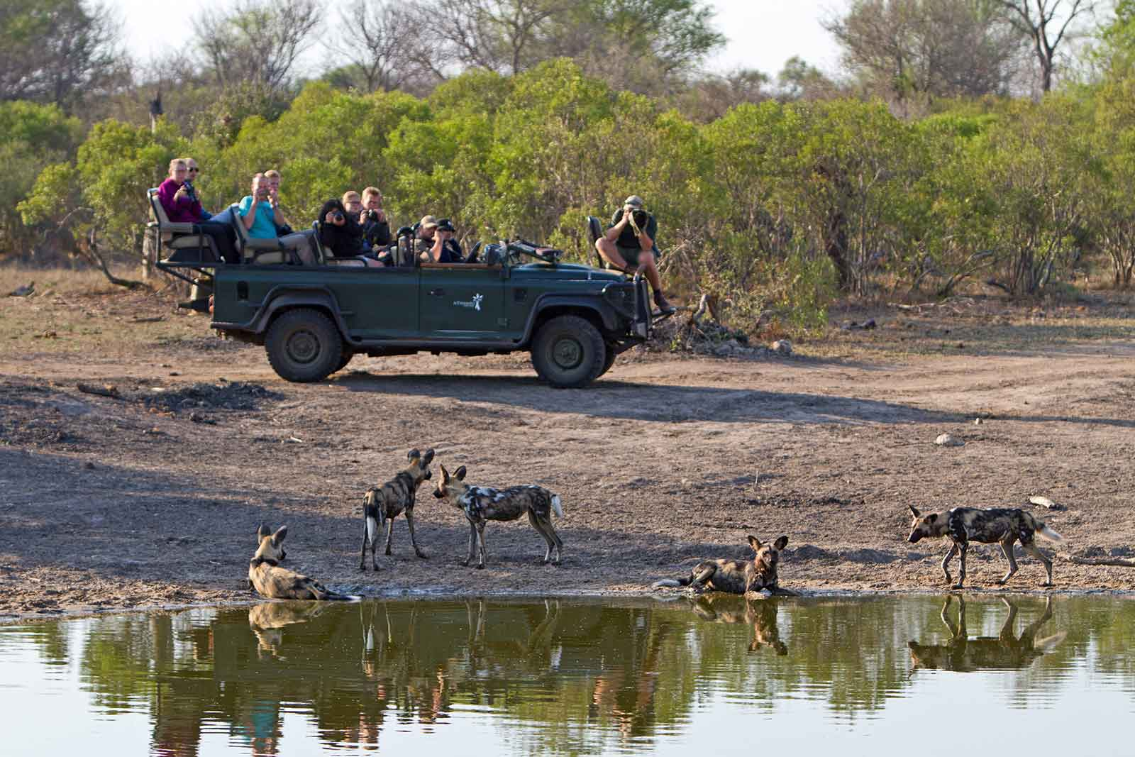 Wild dogs with AoF group guests