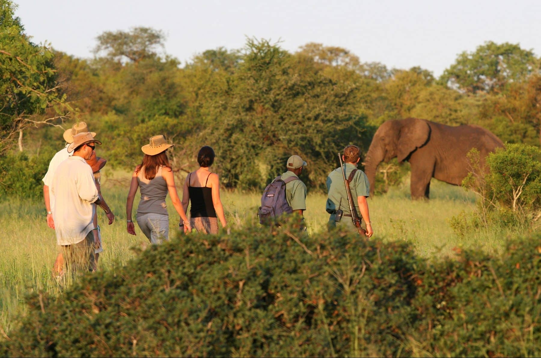 Plains Camp walking with elephant