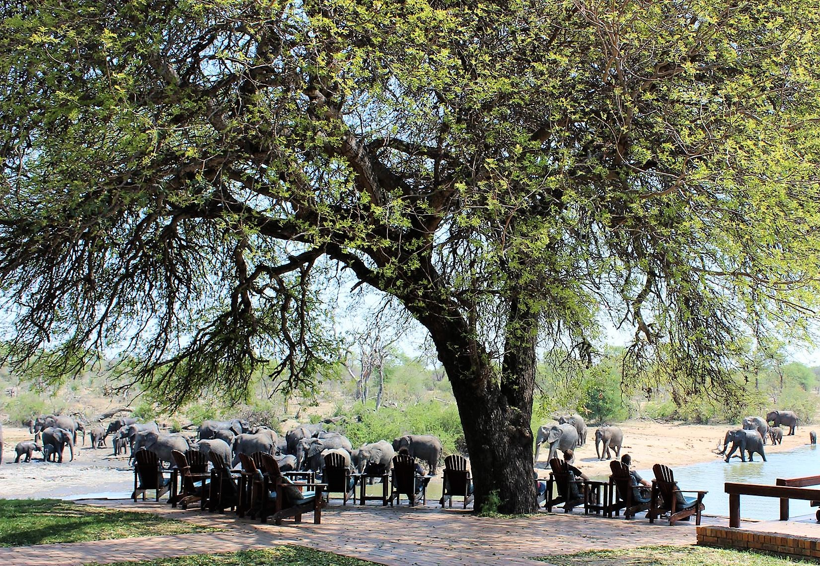 Elephants at Gomo Gomo waterhole