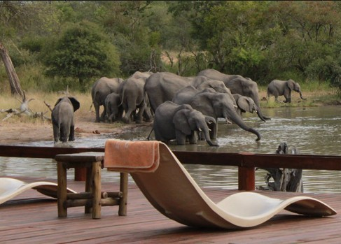 Elephants from deck at Gomo Gomo