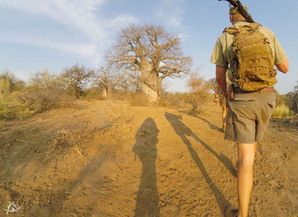 Walking with baobabs, Makuleke