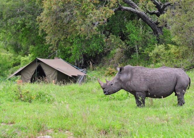 Rhino at Jock Explorer Camp