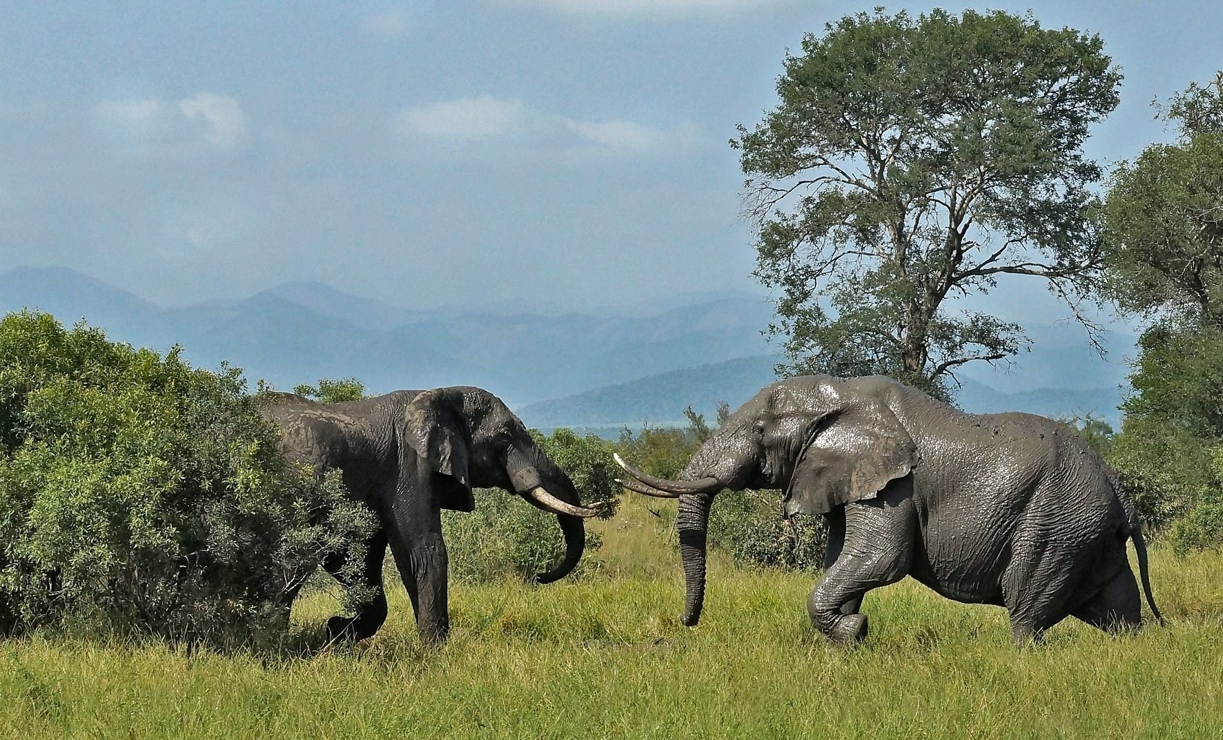 Elephants against Swai mountains, Jaco Marais
