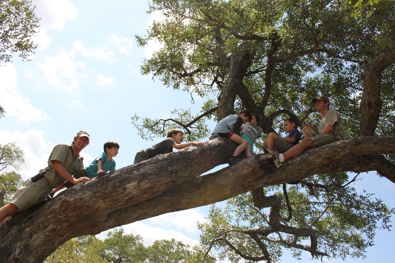 Londolozi Cubs' Den tree climbing