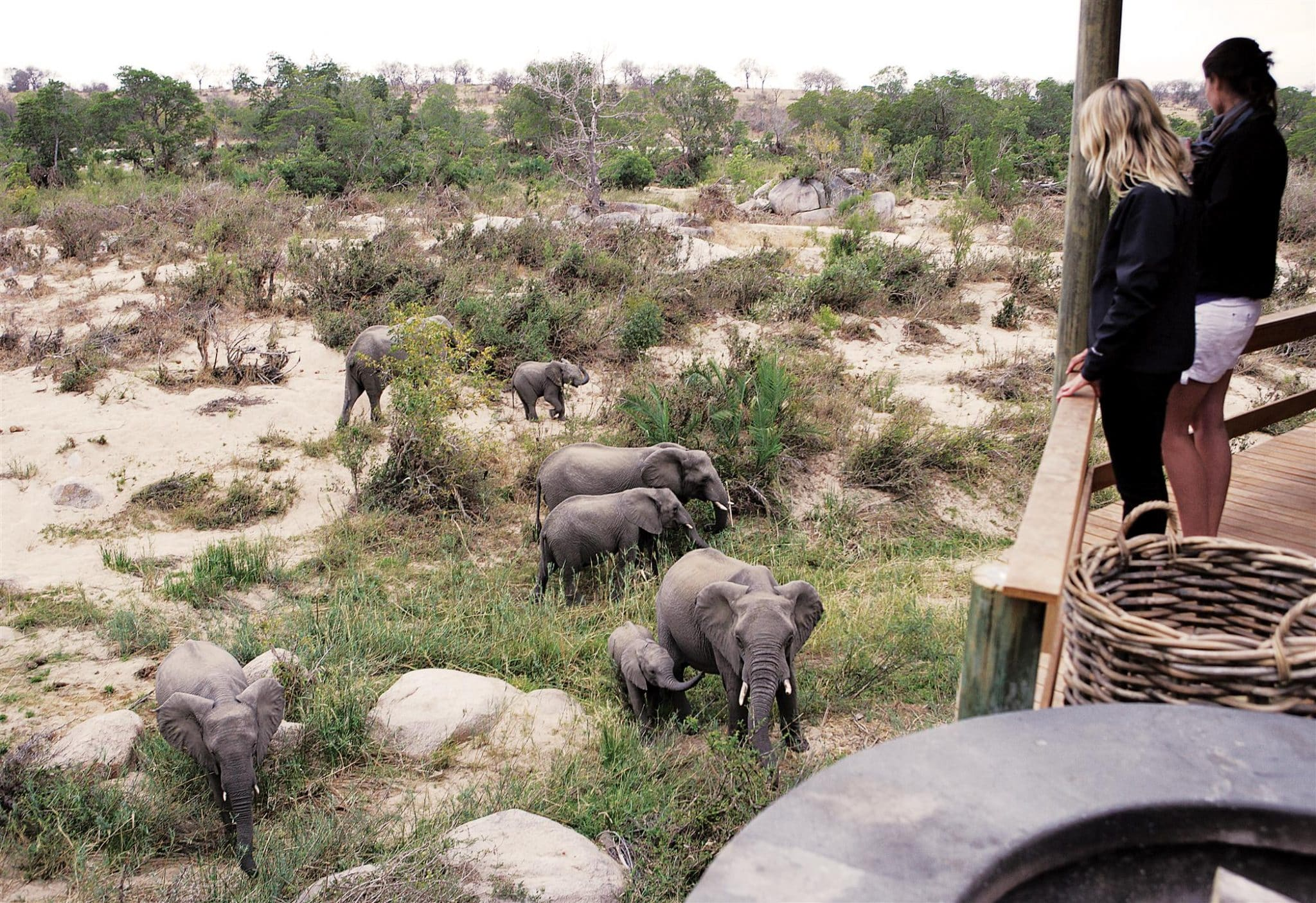 Elephants from the deck at Londolozi Founders Camp