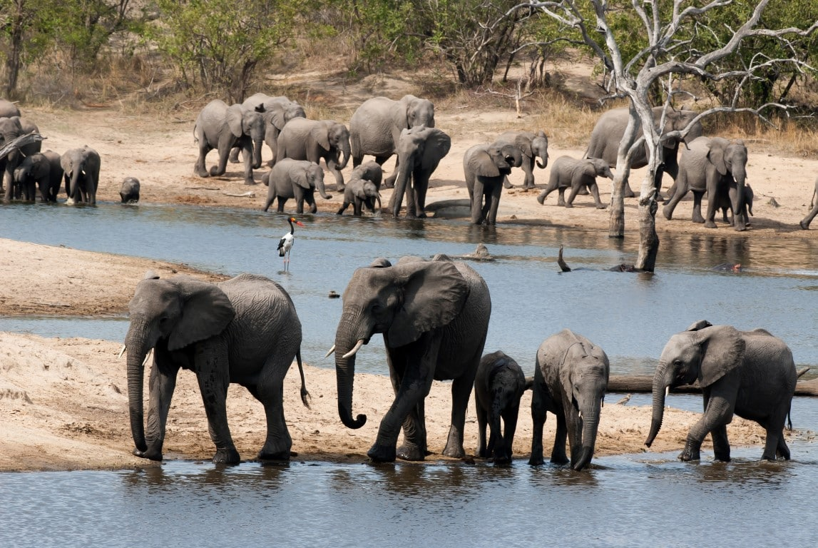 Elephants at Ulusaba dam