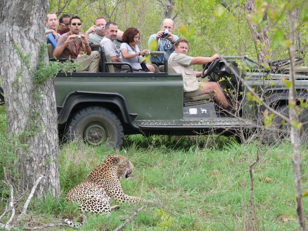 Umkumbe leopard on drive